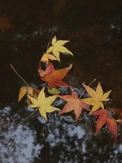 2012-11-14_9829.jpg