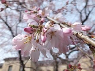 2013-03-22_17299.jpg