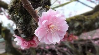 2013-03-23_17450.jpg
