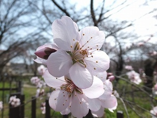 2013-03-23_17465.jpg