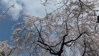 2013-03-23_17480.jpg