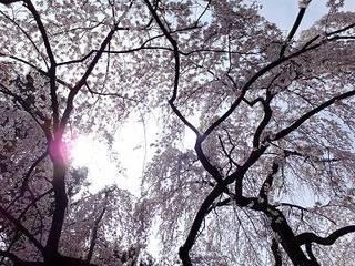 2013-03-23_17589.jpg