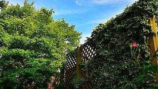 C360_2012-05-04-17-30-27.jpg